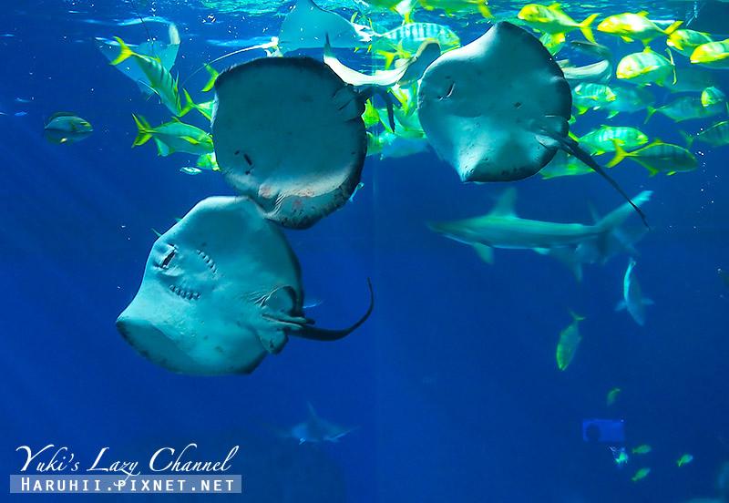 丹麥國家水族館藍色星球33.jpg