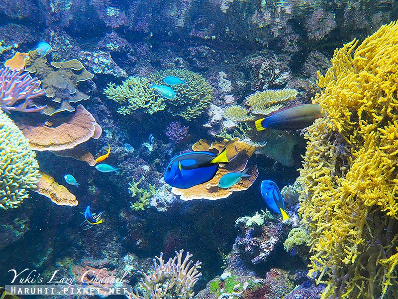 丹麥國家水族館藍色星球34.jpg