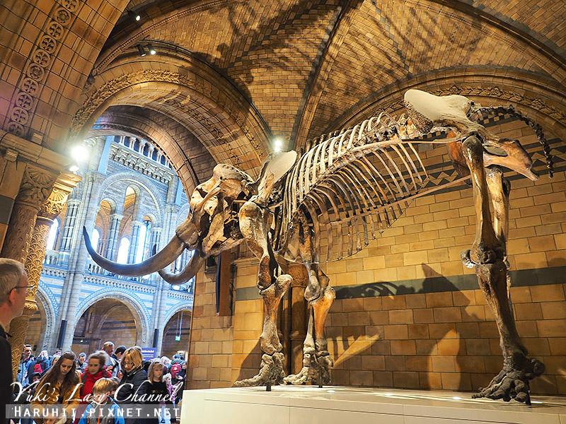 倫敦自然史博物館6.jpg