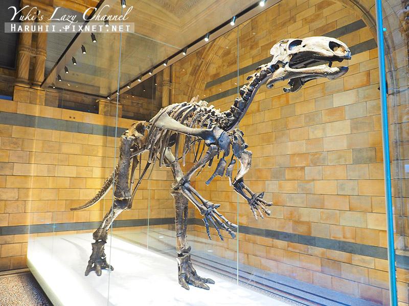 倫敦自然史博物館8.jpg