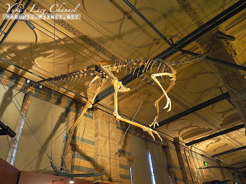 倫敦自然史博物館12.jpg