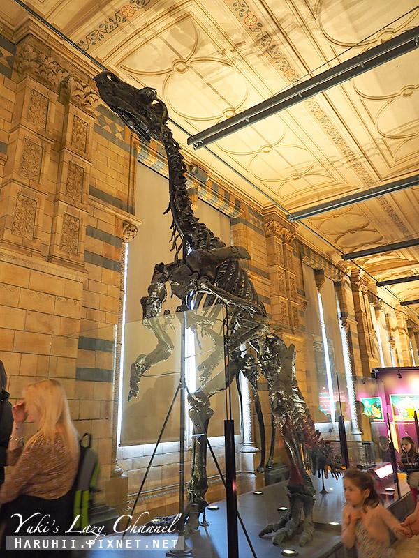 倫敦自然史博物館15.jpg
