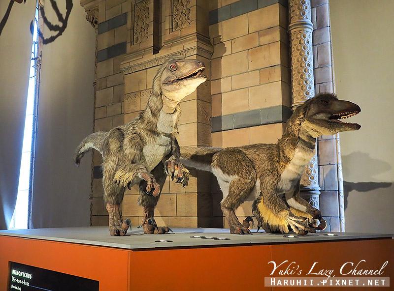 倫敦自然史博物館16.jpg