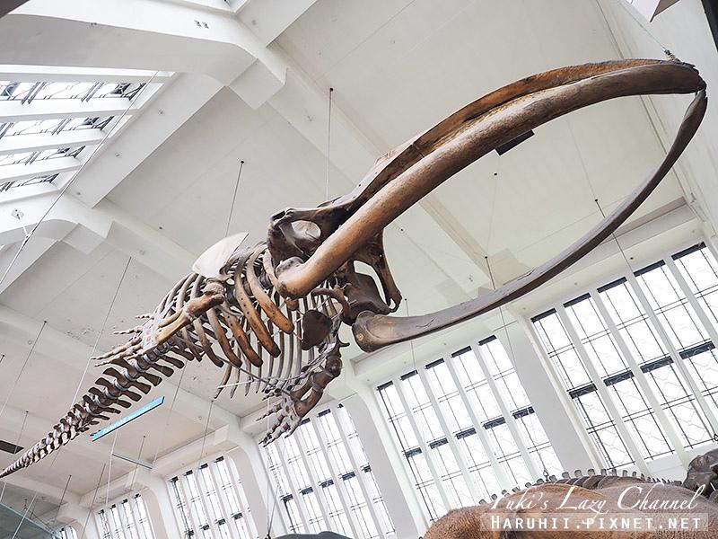 倫敦自然史博物館20.jpg