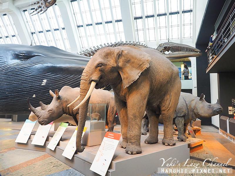 倫敦自然史博物館19.jpg
