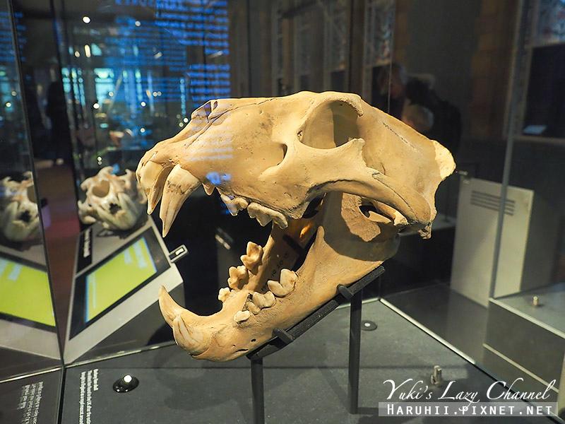 倫敦自然史博物館27.jpg