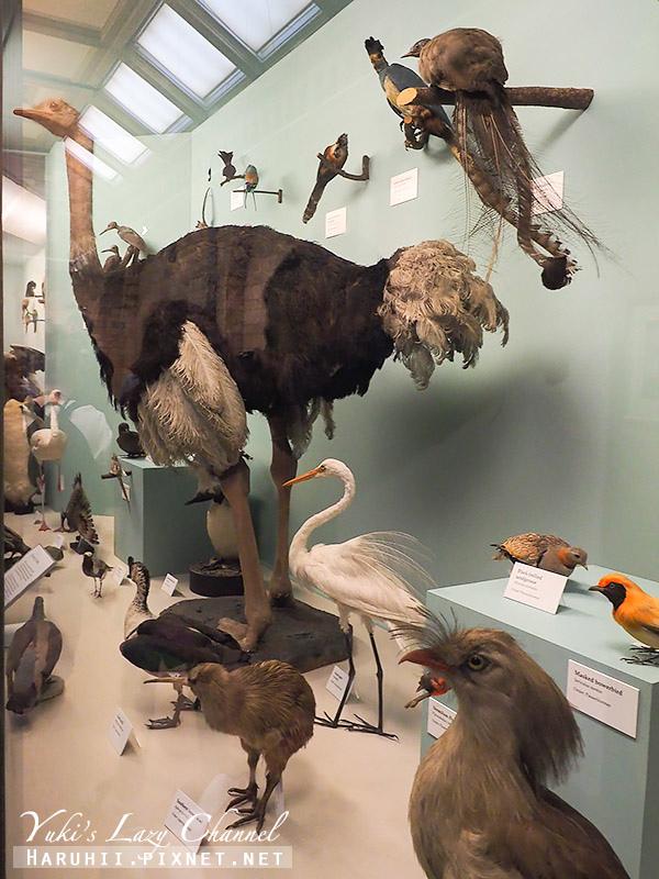 倫敦自然史博物館31.jpg