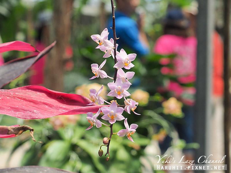 金車礁溪蘭花園5.jpg