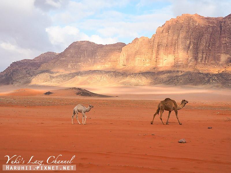 瓦地倫沙漠月亮谷Wadi Rum1