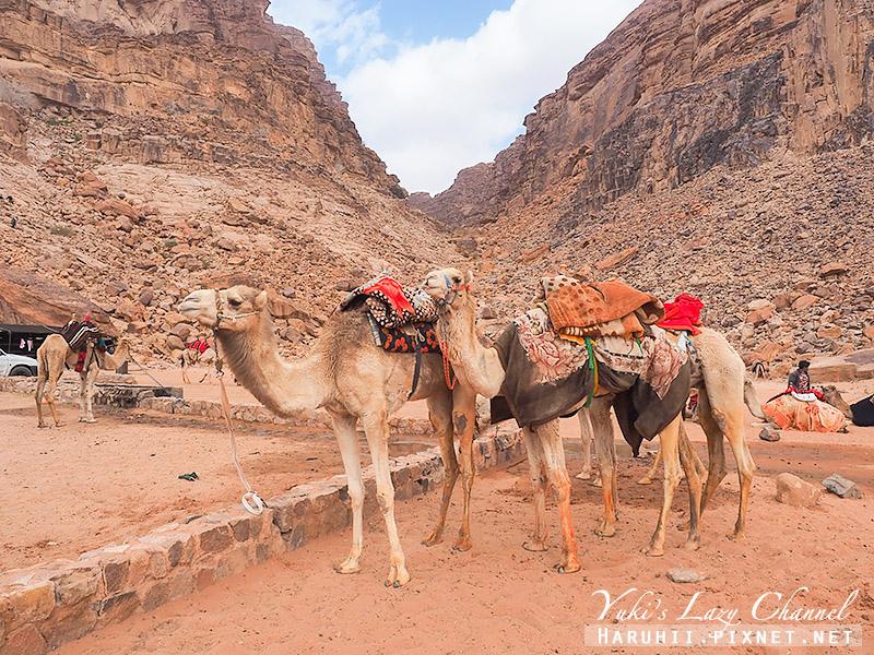 瓦地倫沙漠月亮谷Wadi Rum13