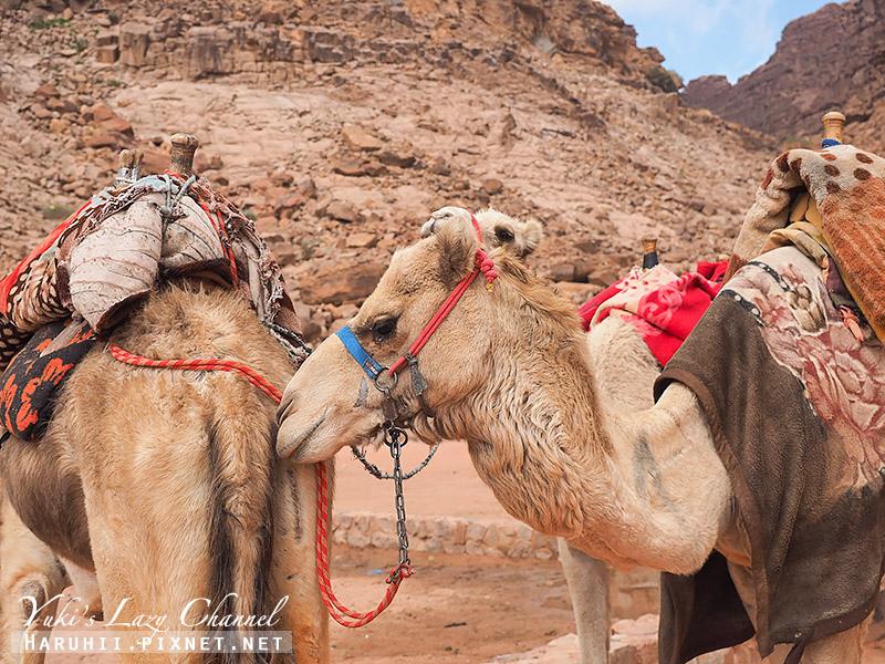 瓦地倫沙漠月亮谷Wadi Rum14