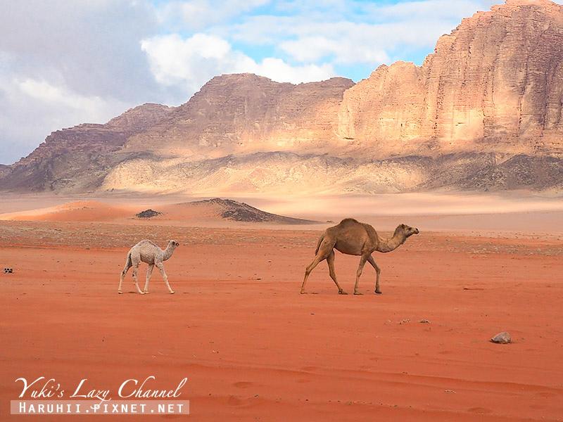 瓦地倫沙漠月亮谷Wadi Rum56