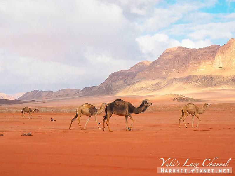 瓦地倫沙漠月亮谷Wadi Rum57