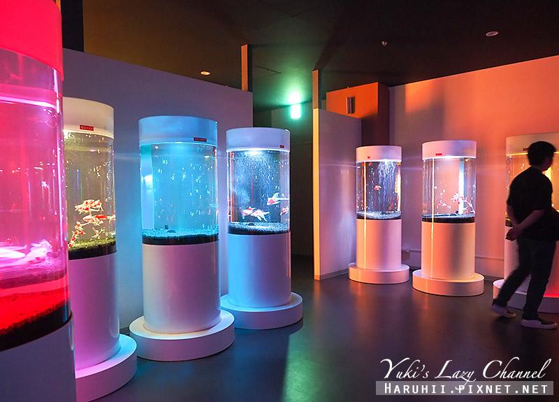 M!NARA百貨奈良金魚博物館6.jpg