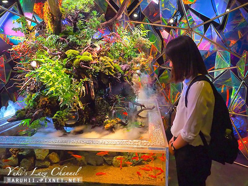M!NARA百貨奈良金魚博物館21.jpg