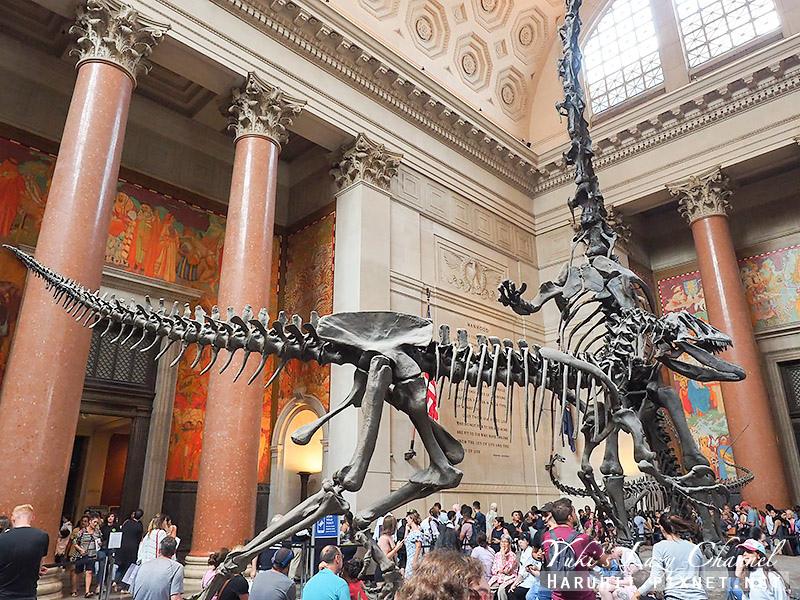 美國自然史博物館4.jpg