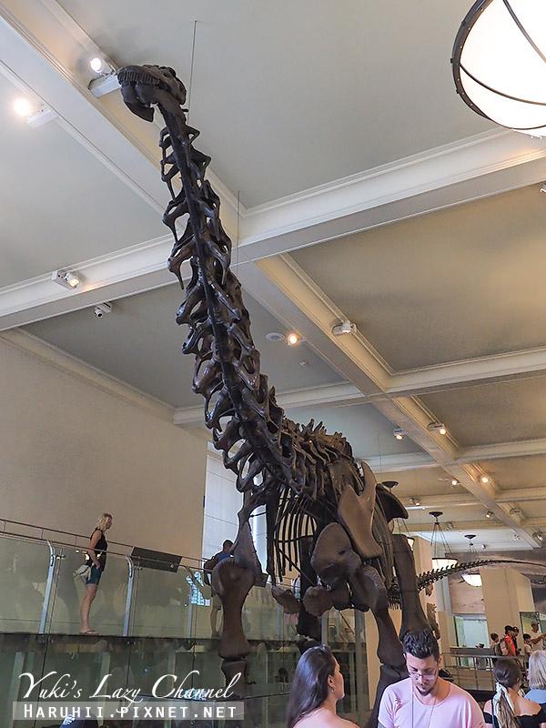 美國自然史博物館12.jpg