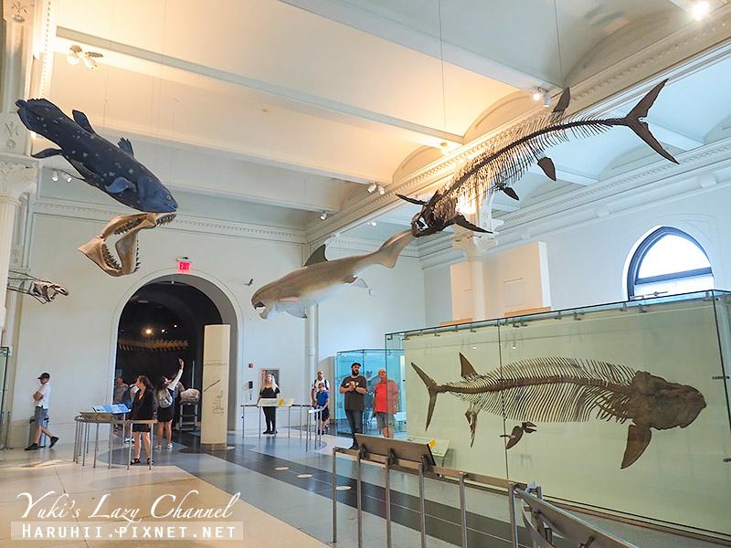 美國自然史博物館18.jpg