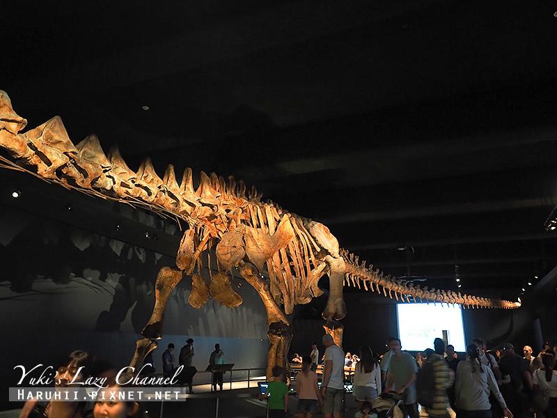 美國自然史博物館21.jpg