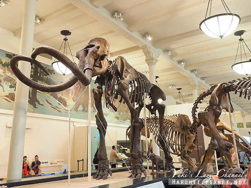 美國自然史博物館22.jpg