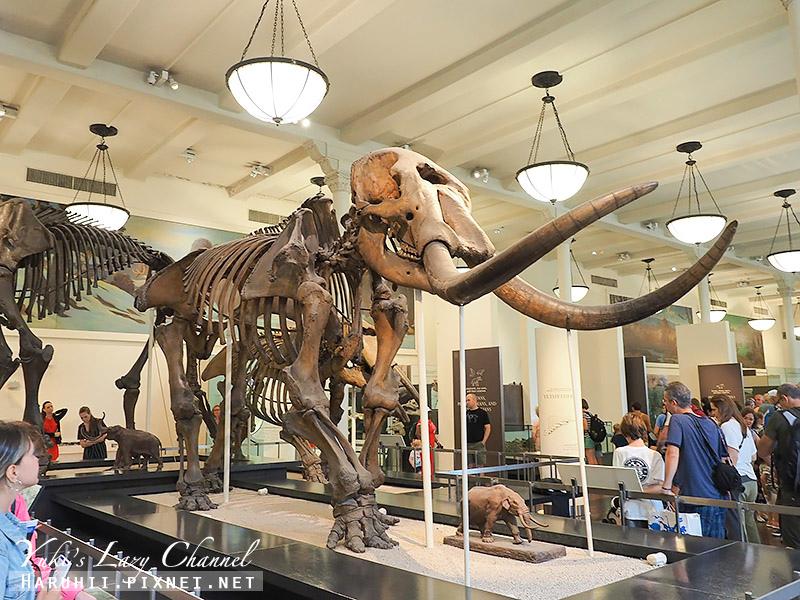 美國自然史博物館23.jpg