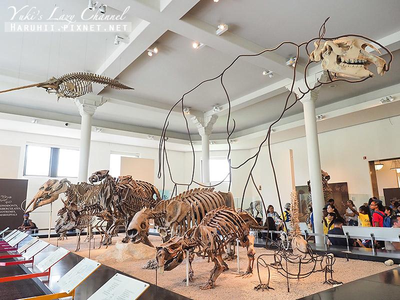 美國自然史博物館26.jpg