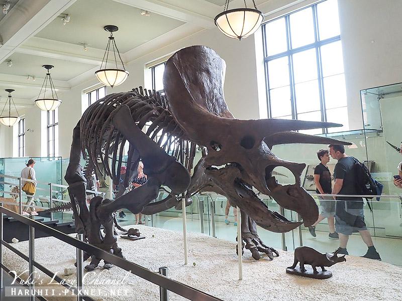 美國自然史博物館27.jpg