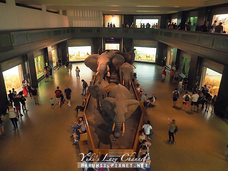 美國自然史博物館30.jpg