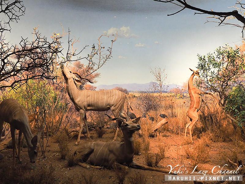 美國自然史博物館31.jpg