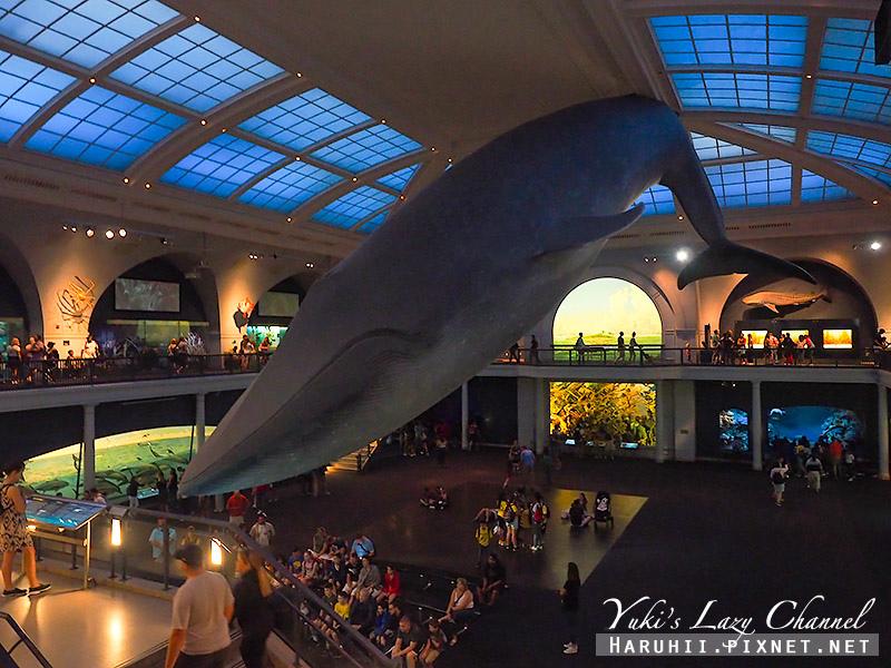 美國自然史博物館39.jpg