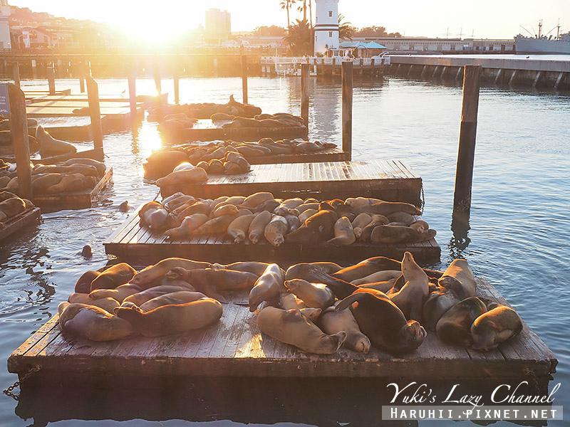 舊金山漁人碼頭Fisherman's Wharf Pier39 14.jpg