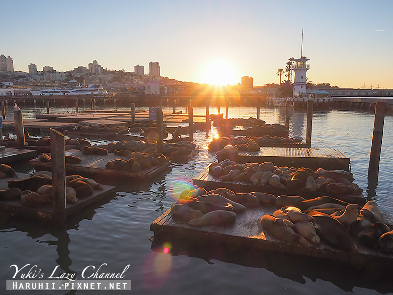 舊金山漁人碼頭Fisherman's Wharf Pier39 15.jpg