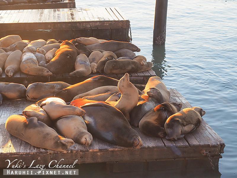 舊金山漁人碼頭Fisherman's Wharf Pier39 17.jpg