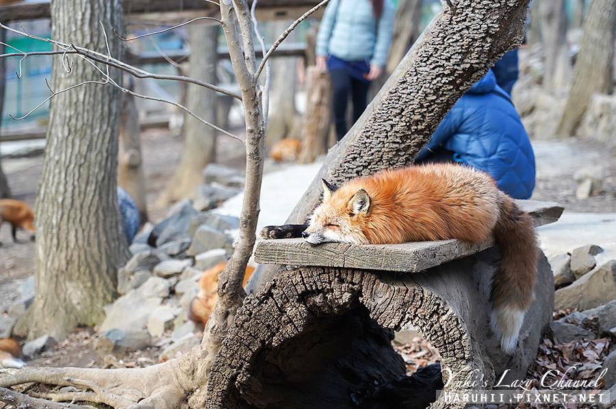 宮城藏王狐狸村14.jpg