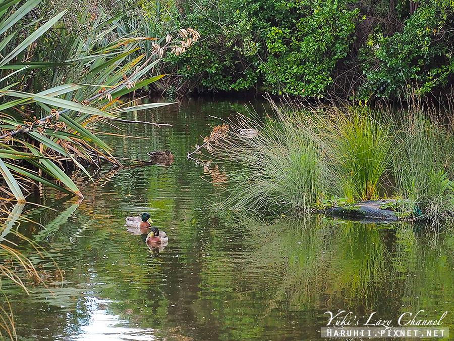 蒂阿瑙湖Lake Te Anau13.jpg