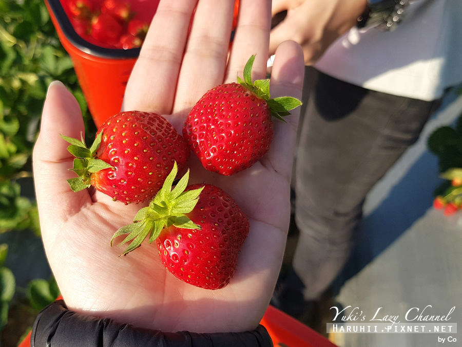 幸福莓滿草莓園26.jpg