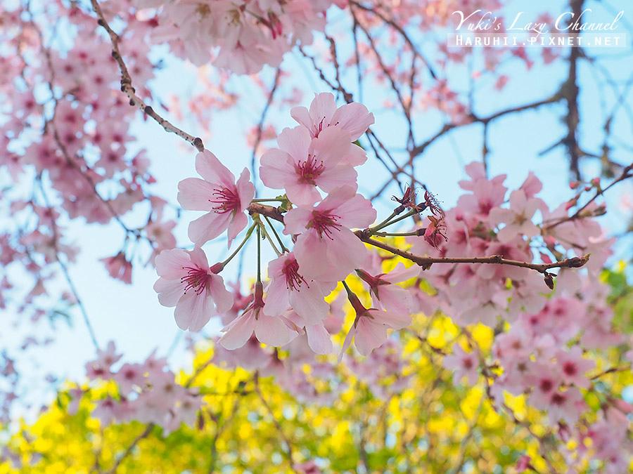 奧克蘭獨樹山one tree hill31.jpg