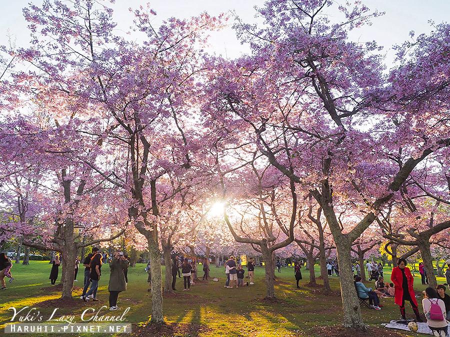 奧克蘭獨樹山one tree hill34.jpg