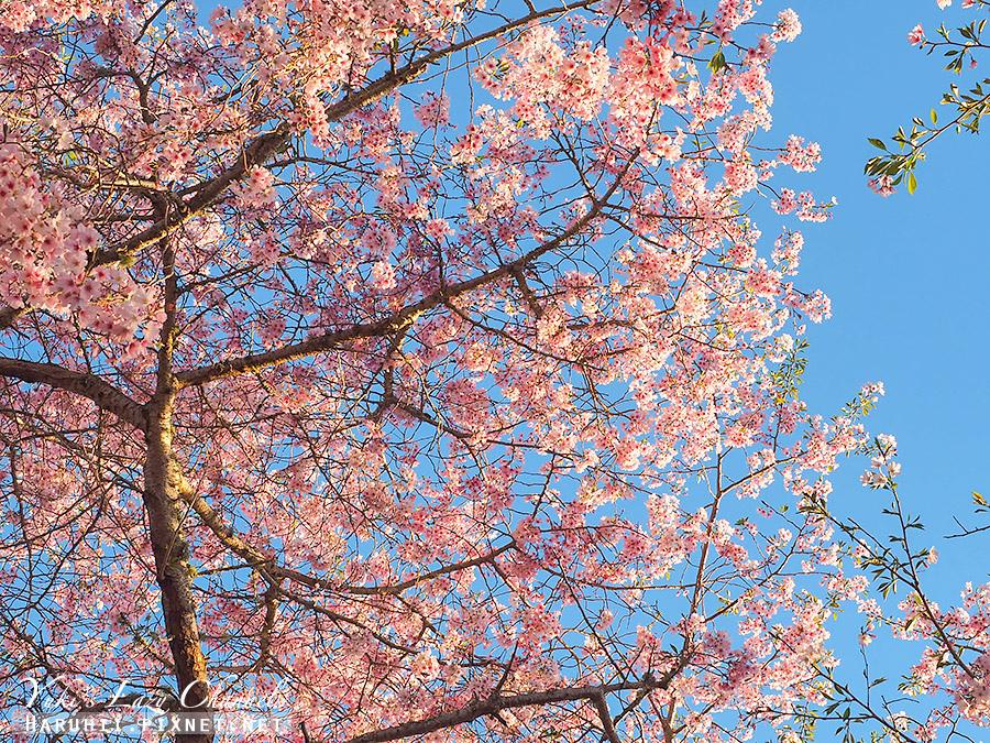 奧克蘭獨樹山one tree hill32.jpg