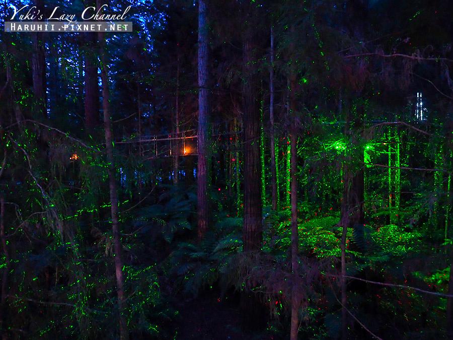 羅托魯瓦Redwoods Treewalk紅木森林樹頂步道11.jpg