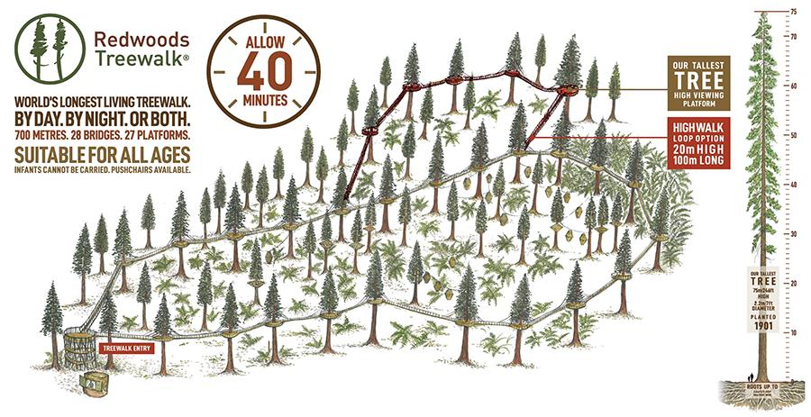 羅托魯瓦Redwoods Treewalk紅木森林樹頂步道24.png
