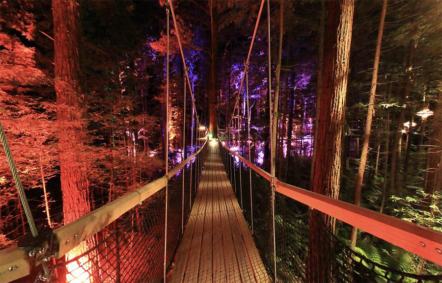 羅托魯瓦Redwoods Treewalk紅木森林樹頂步道26.jpg