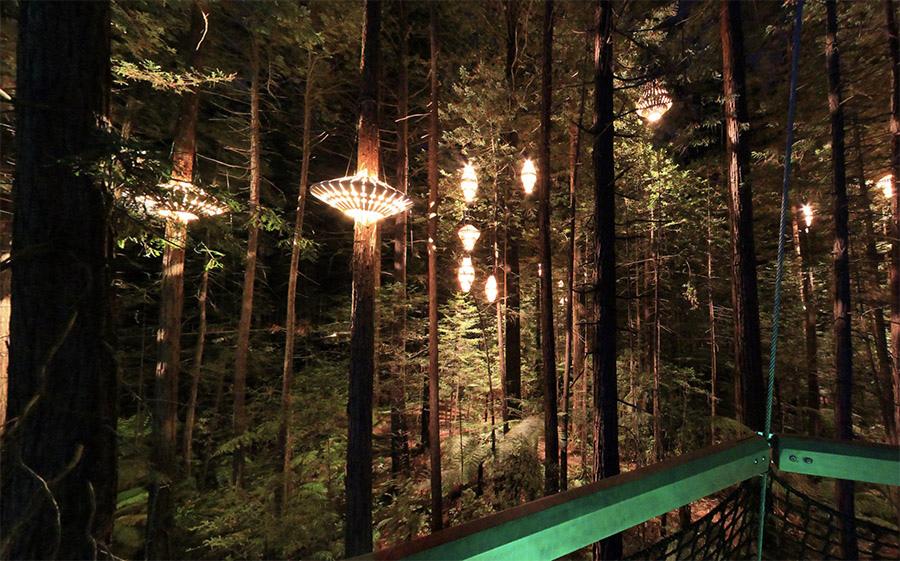 羅托魯瓦Redwoods Treewalk紅木森林樹頂步道27.jpg
