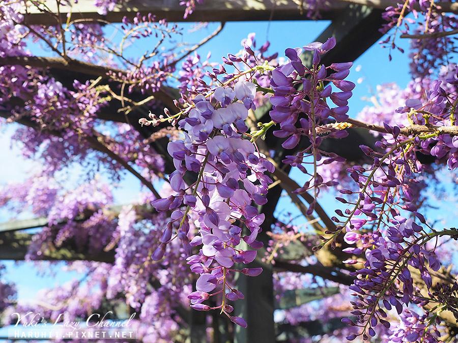 羅托魯瓦政府花園Rotorua Government Gardens16.jpg