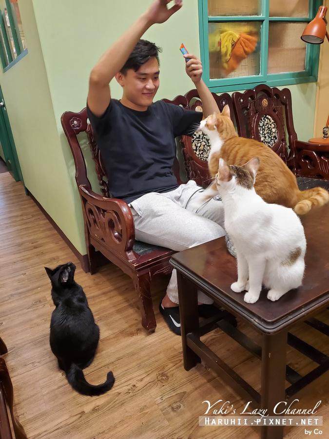 台北中途貓餐廳_貓藝家69.jpg