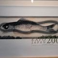 這是魚的樣子