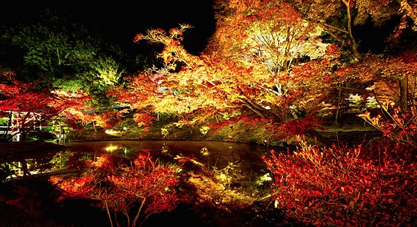 高台寺沼池