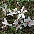 有6花瓣耶
