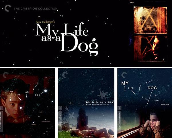 My-life-as-a-dog-02