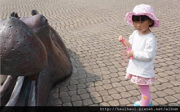 2012-03-05 第二次來動物園~河馬